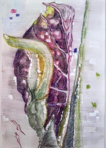 One day flowering, pastel on paper - 18 x 24 cm